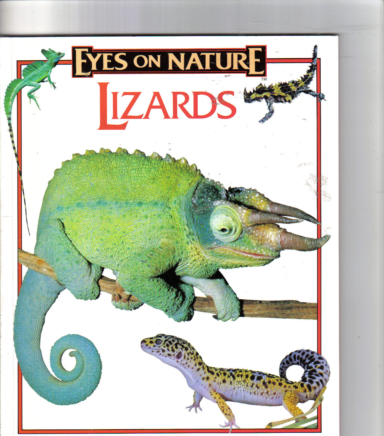 Eyes On Nature Lizards